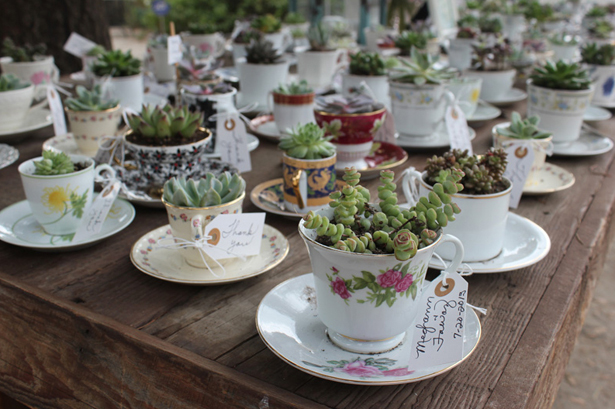 Wedding succulents in teacups with saucers | Confetti.co.uk