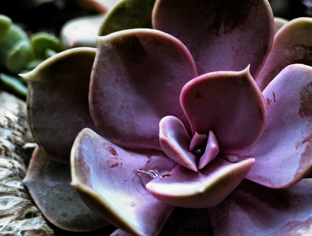 Purple wedding succulent | Confetti.co.uk