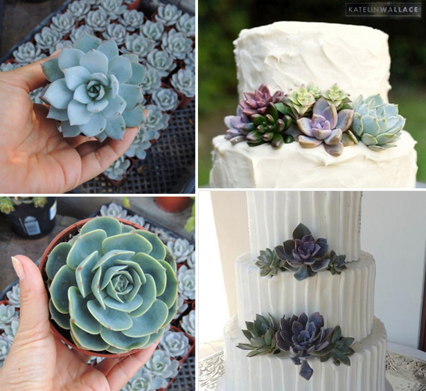 Wedding succulent cuttings wedding and cake decorations | Confetti.co.uk