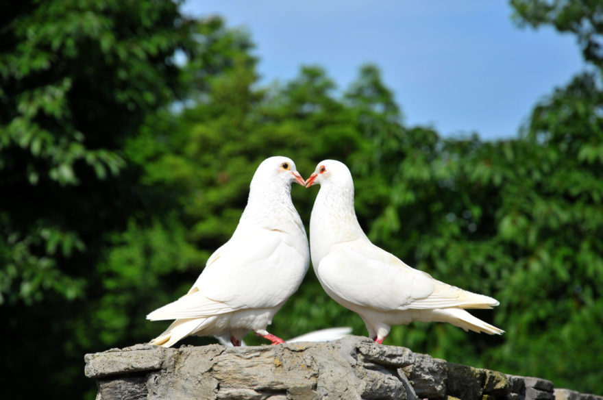 Lovebirds two white doves. Rustic wedding ideas with The Woodland Trust | Confetti.co.uk