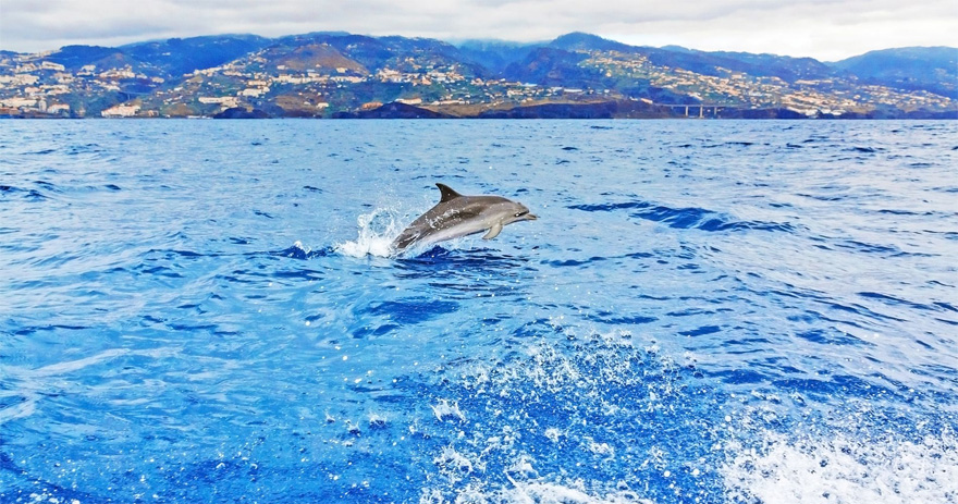 Bird Dolphin and Whale Watching for Two in Madeira Portugal with Tinggly Experiences | Confetti.co.uk
