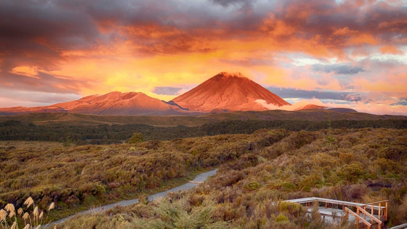 honeymoon-in-new-zealand